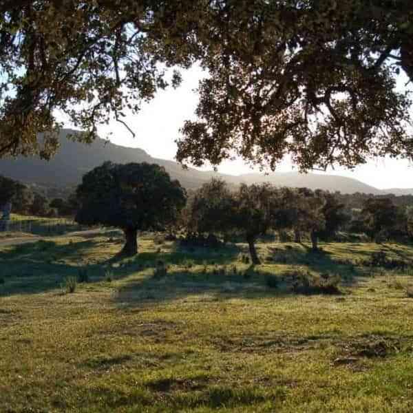 Valle de Alcudia y Sierra Madrona recibirá cerca de 1,5 millones de euros en la tercera asignación del PDR 2014-2020
