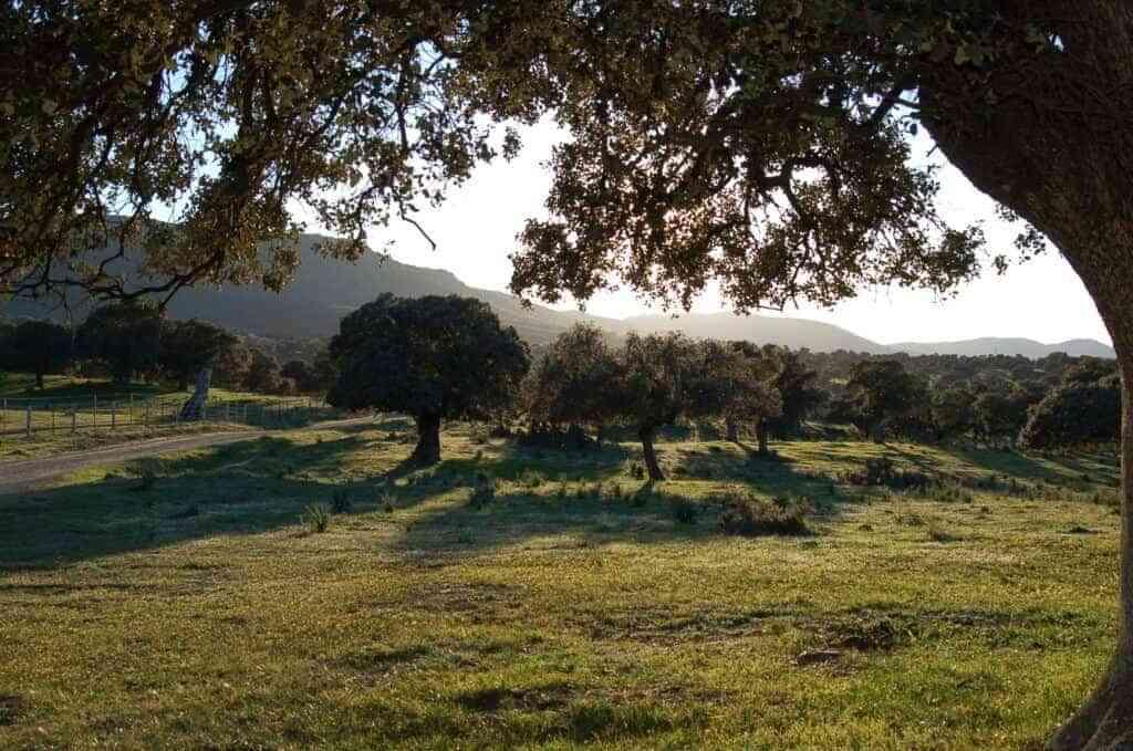 Encinar Valle de Alcudia - Valle de Alcudia y Sierra Madrona recibirá cerca de 1,5 millones de euros en la tercera asignación del PDR 2014-2020